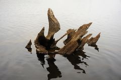 Wood art in lake. The remains of a fallen tree has rotted to form an unusual and artistic shape in a still pond Royalty Free Stock Photo