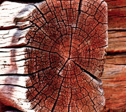 Wood as a background Royalty Free Stock Images