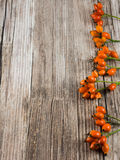 Wood with autumnal fruits to use as background Royalty Free Stock Images