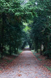 Wood. Avenue in the woods in autumn Stock Photography