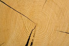 Wood background. Cut of wood with cracks Royalty Free Stock Image