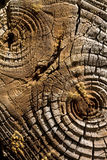 Wood background. Abstract old brown wood background Royalty Free Stock Photo