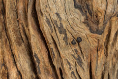 Wood background. Abstract background design texture wood Stock Photo
