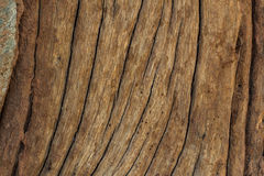 Wood background. Abstract background design texture wood Royalty Free Stock Photo