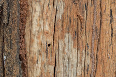 Wood background. Abstract background design texture wood Stock Image