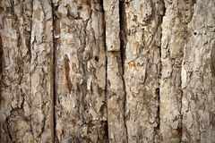 Wood Background. S outdoor and horizontal image Royalty Free Stock Photo