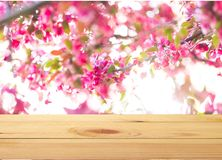 Wood. Background blurred blur food bokeh shelf royalty free stock photography