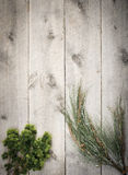 Wood background with branches. Wood background with pine tree seedlings Royalty Free Stock Photos