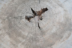 Wood background. Close up of old wood texture background Royalty Free Stock Photo