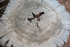 Wood background. Close up texture of old bark wood use as natural background Royalty Free Stock Image
