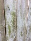 Wood background faded gray green algae accent knotty grunge  fence Royalty Free Stock Images