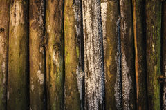 Wood background with fungus Stock Photo