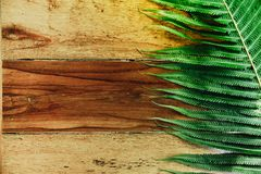 Wood background and green fern leaves with sunshine. Summer background with copy space Stock Images