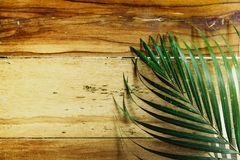 Wood background and green fern leaves with sunshine. Summer background with copy space Royalty Free Stock Image