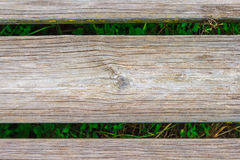 Wood background. With green vegetation Stock Photography