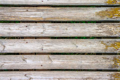 Wood background. With green vegetation Royalty Free Stock Photography