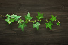 Wood background with ivy Stock Photography