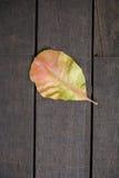Wood background. Leaf old wood background Stock Images