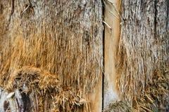 Wood background macro and burst Stock Photography