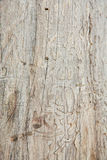 Wood background. Old textured tree wall wooden Stock Photos