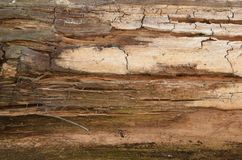 Wood background. Old wooden wall. Old Wood. Old wood background. Weathered wood texture closeup photo. Old tree. stock photography