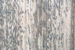 Wood background patterns in the old and new wood pieces. Old and new wood backgrounds of planks and beams, photographed with macro, patterns and worn surfaces royalty free stock image