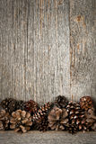 Wood background with pine cones Stock Photography