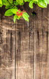 Wood Background with Red Flower & Green Leaves Royalty Free Stock Photo