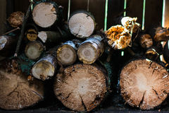 Wood background. Spread round wood in village Royalty Free Stock Photos