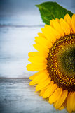 Wood background with sunflowers Stock Images
