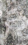 Wood background. Royalty Free Stock Image