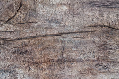 Wood background texture. Texture Bark, nature texture Stock Photo