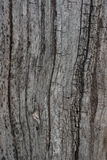 Wood background and texture. Black and white wood background and texture Stock Photography