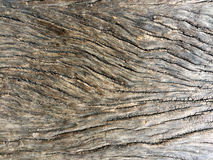Wood for background texture. Wood brown nature for background texture Stock Photos