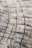 Wood Background and Texture - Hard Contours, Lines and Curves. A close-up view of exposed wood from a Leadwood tree, as seen in the wilds of Africa.  This image Royalty Free Stock Image