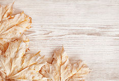 Wood Background Texture and Leaves, White Wooden Plank, Autumn Stock Photography