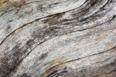 Wood background and texture. Royalty Free Stock Photo