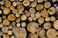 Wood background. Texture. Saw cut maple logs royalty free stock image