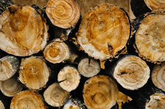 Wood background. Texture. Saw cut maple logs Stock Photos