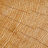Wood Background Texture Section Of Cracked Hardwood Growth Rings Stock Photos