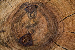 Wood Background. Texture of tree stump Stock Photography