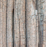 Wood background. Background of wood, texture wood used as natural background Royalty Free Stock Photo