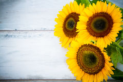 Wood background with three sunflowers Royalty Free Stock Photos