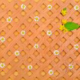 Wood background and  white daisies. Wood background, decorative grille, white daisies and pattern of wild flowers Stock Photos