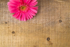 Wood background wooden nature raw boards material flower gerbera Royalty Free Stock Photos