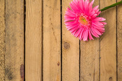 Wood background wooden nature raw boards material flower gerbera Stock Images