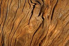 Wood bakgrund Royaltyfri Bild