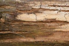 Wood bakgrund trägammal vägg gammalt trä gammalt trä för bakgrund Ridit ut wood texturcloseupfoto gammal tree arkivbild