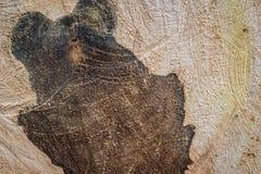 wood bakgrunder Arkivfoto