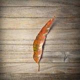 Wood bakgrundshöst för blad royaltyfri foto